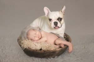 Baby with french bulldog composite photo - Essex baby photographer