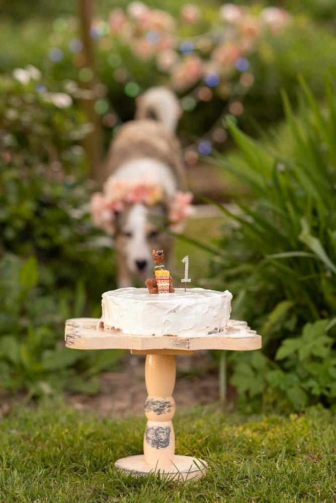 Doggie cake smash rescue dogs first birthday