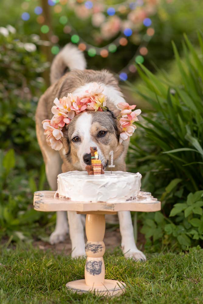 Romanian rescue pups first birthday - Essex photographer
